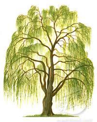 willow class logo